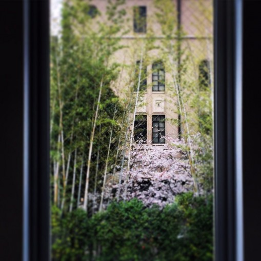 京都支店のお隣のフォーチュンガーデン(旧島津製作所)の桜 Pic by Kaz Sasanami
